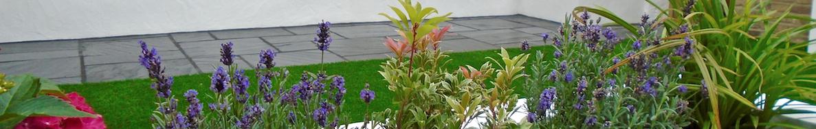 garden-design-clapham